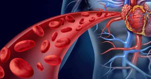 enhanced Blood Circulation